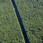 Plantation sur Valcivières